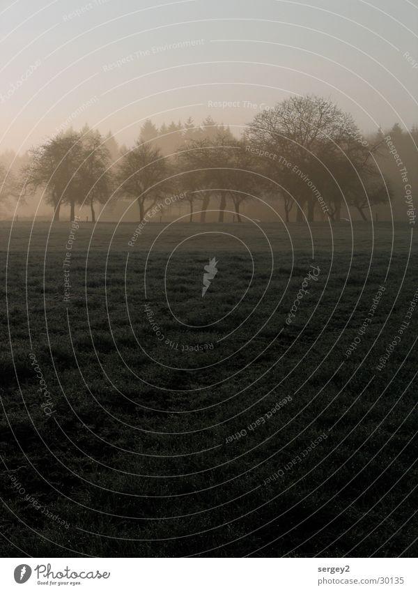 früh morgens 1 Baum grau Feld Nebel Landwirtschaft Tau mystisch