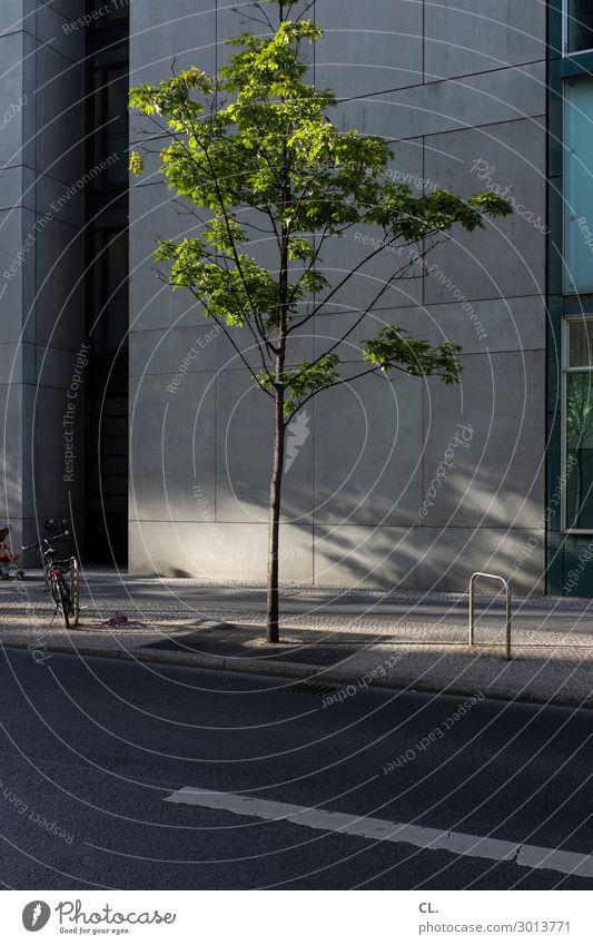 baum und fahrrad Baby 1 Mensch Sommer Schönes Wetter Baum Berlin Stadt Stadtzentrum Haus Hochhaus Gebäude Architektur Mauer Wand Verkehr Verkehrswege