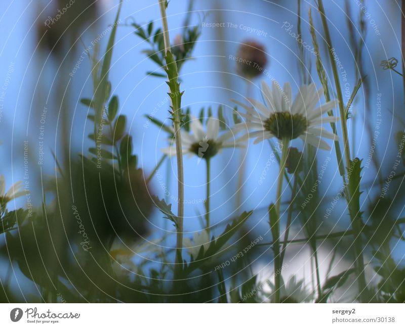 sag mir wo die Blumen sind... Gras grün Feld Zoomeffekt Froschperspektive Nahaufnahme Himmel Bodenbelag