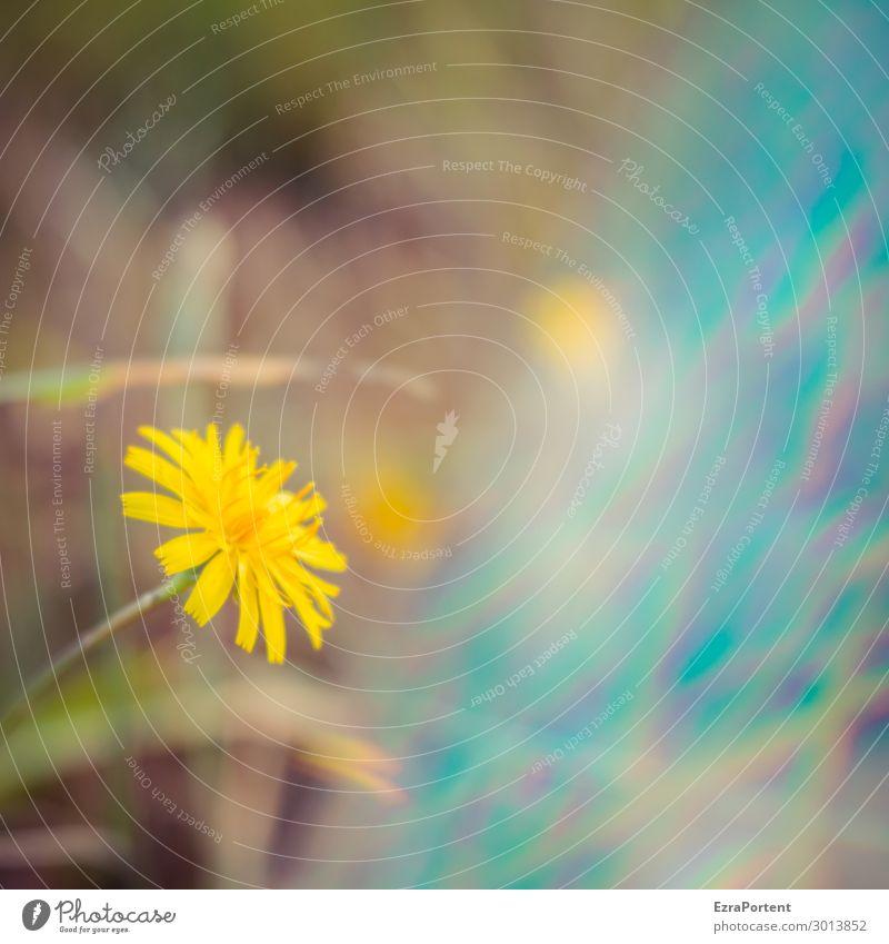 ° Umwelt Natur Sommer Pflanze Blume Blüte Garten blau gelb Blühend Fehler Unschärfe Farbfoto Außenaufnahme Nahaufnahme Experiment Menschenleer