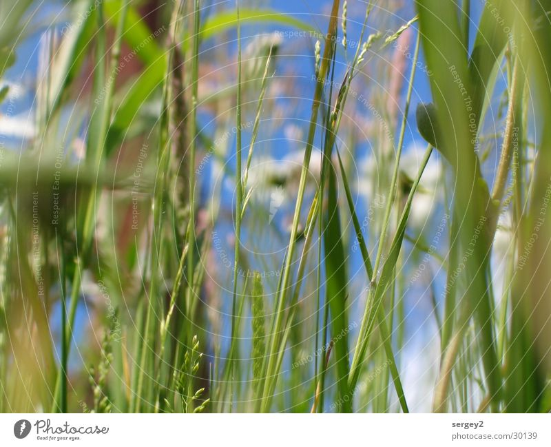 es grünt so grün..... Gras Blume Feld Zoomeffekt Nahaufnahme Himmel Bodenbelag