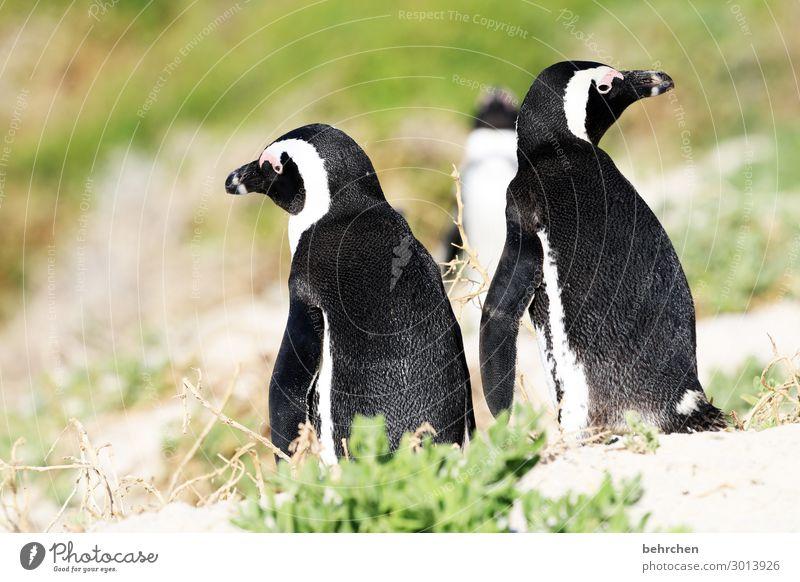 nicht immer einer meinung Tier Tierporträt wild Südafrika frei Kontrast Licht Tag Morgen Menschenleer Farbfoto Außenaufnahme Nahaufnahme Detailaufnahme Fernweh