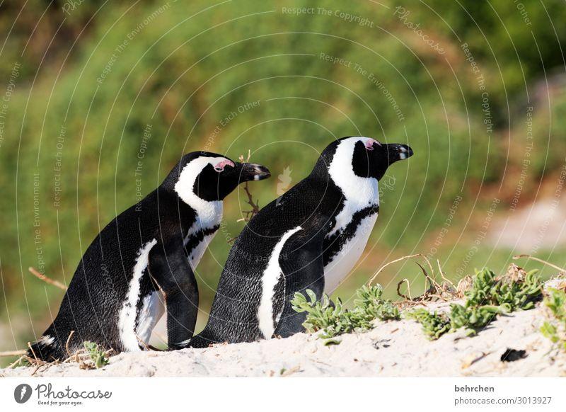 gemeinsam in die gleiche richtung Ferien & Urlaub & Reisen Natur Pflanze Landschaft Meer Blatt Ferne Strand Küste Gras Tourismus außergewöhnlich Freiheit