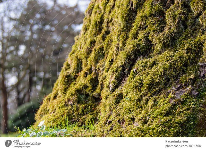 Moosig Natur Landschaft Tier Sommer Garten Park Wiese Wald Holz Glas leuchten Wachstum bewachsen Baum Baumstamm Pflanze grün Hintergrundbild natürlich Farbfoto