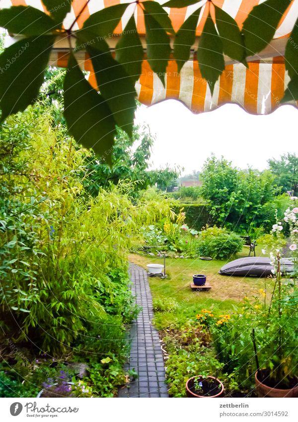 Wal im Garten Blume Blühend Blüte Gras Schrebergarten Jalousie Markise Kleingartenkolonie Menschenleer Natur Pflanze Rasen Wiese Sommer Textfreiraum Silhouette