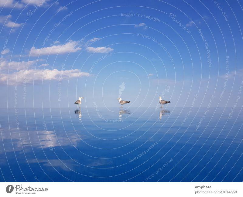Drei Möwen mit Wasserreflexionen stehen auf dem Überlaufrand eines Schwimmbeckens auf einem blauen Himmelshintergrund schön Schwimmbad Sommer Sonne Meer Natur