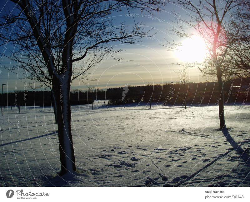 wintersonne 3 Baum Winter Landschaft Schweden Wintersonne Ryd