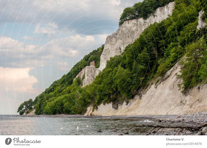 Steilküste Natur Landschaft Tier Wasser Himmel Sommer Felsen Küste Strand Ostsee Insel Rügen Klippe Schwan 3 Stein fest Flüssigkeit frisch gigantisch hoch