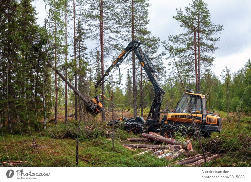 Wirtschaftswald Himmel Baum Wolken Wald Holz Arbeit & Erwerbstätigkeit Technik & Technologie Zukunft Industrie Güterverkehr & Logistik Landwirtschaft Beruf