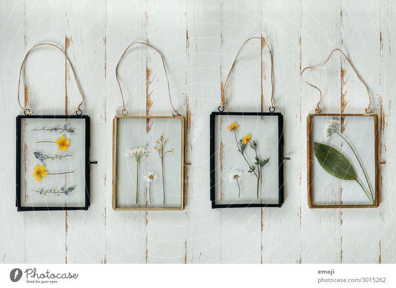 getrocknete Blumen im Glasrahmen Häusliches Leben Innenarchitektur Dekoration & Verzierung Kitsch Krimskrams Sammlung Bilderrahmen Inspiration selbstgemacht