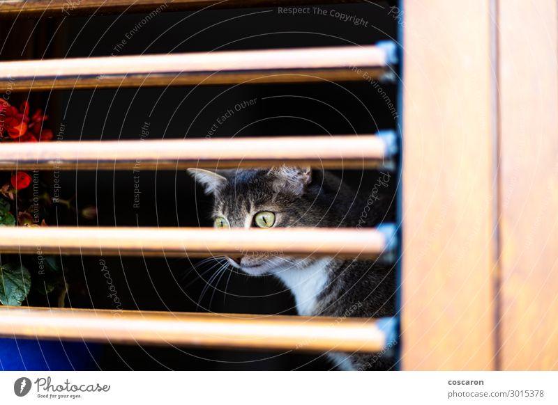 Katze Ferien & Urlaub & Reisen Natur alt Sommer blau Farbe schön weiß Haus Tier Einsamkeit dunkel schwarz Gesicht Holz