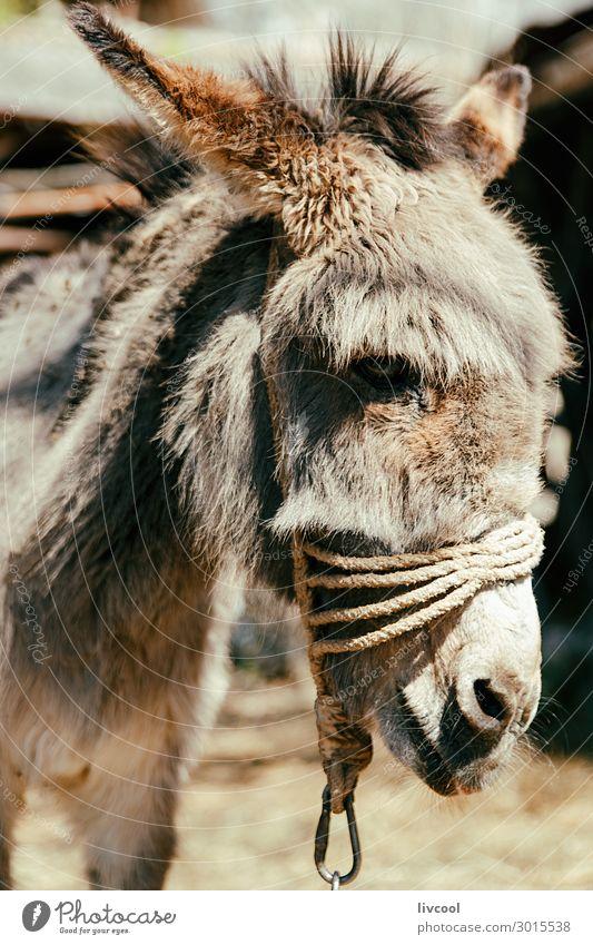 Natur Tier Gesicht braun wild Europa Freundlichkeit Seil Bauernhof Dorf Gesäß heimwärts rustikal ländlich Esel Balkan