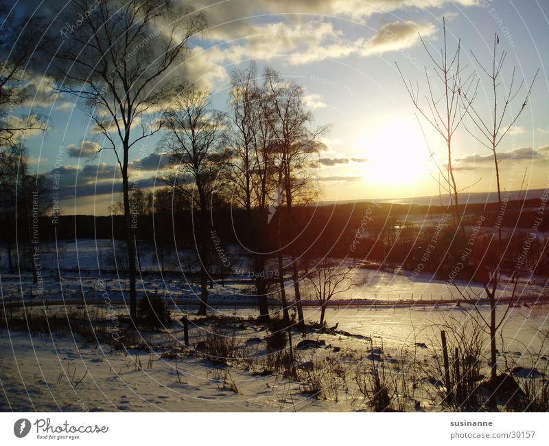 wintersonne 1 Baum Sonne Winter Schnee Eis Schweden Vätternsee Motala