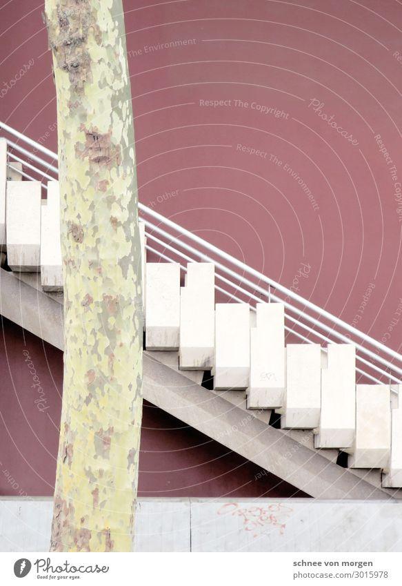"""aubergine oder violett Baum Stadt Bauwerk Gebäude Architektur Mauer Wand Treppe gehen Blick ästhetisch eckig elegant trashig trist """"weg laufen stein marmor hoch"""