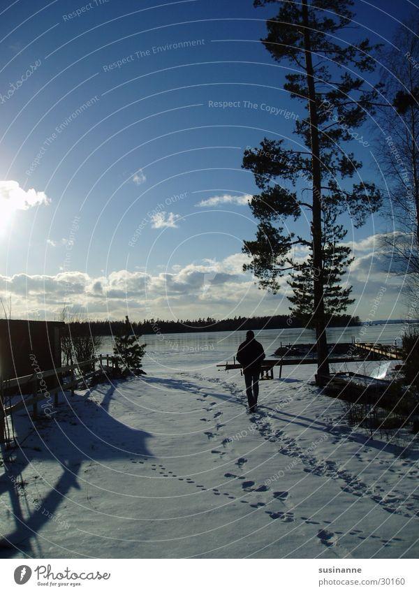 am vättern 3 Winter Schnee See Spuren Schweden Kiefer Vätternsee Motala
