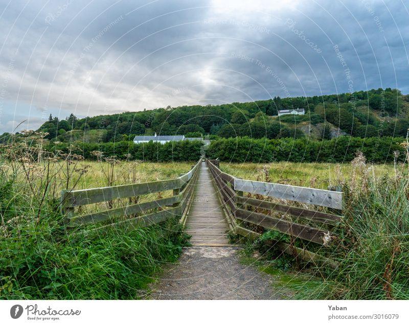 The way Ferien & Urlaub & Reisen wandern Wiese Feld Küste Nordsee grün Einsamkeit Steg Brückengeländer Schottland Naturschutzgebiet Farbfoto Außenaufnahme