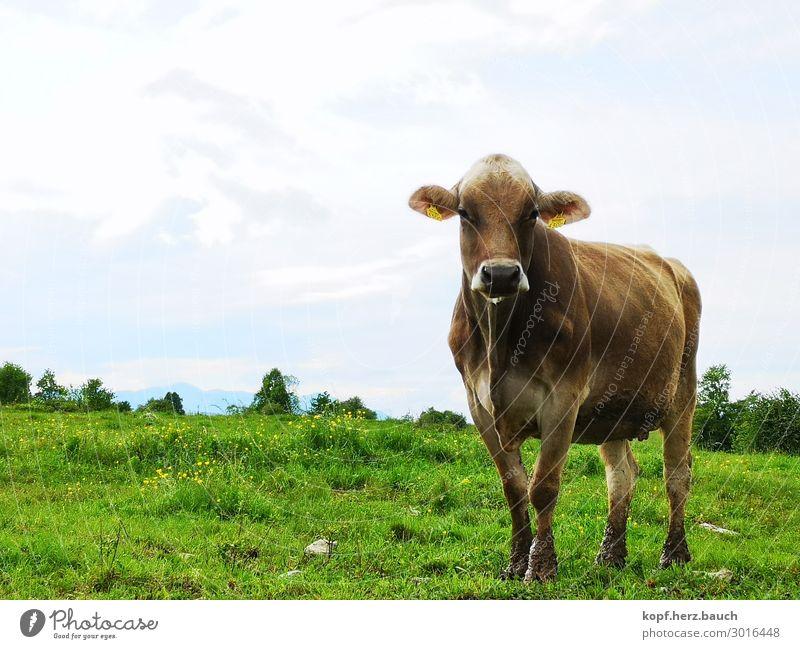 Blinde Kuh Tier Kraft beobachten Klima Weide Bioprodukte Vertrauen Vegetarische Ernährung Vegane Ernährung Fressen Klimawandel Wurstwaren Verantwortung Nutztier