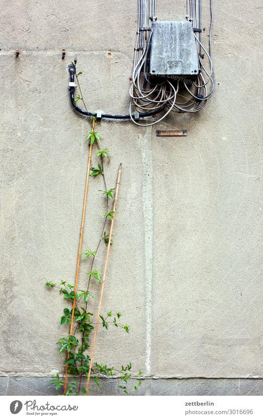 Kabelsalat mit Zuwachs Telefon Telefonkabel Verbindung Telekommunikation Post sprechen link Verteiler Ast Zweig Ranke Pflanze Wand Mauer Textfreiraum