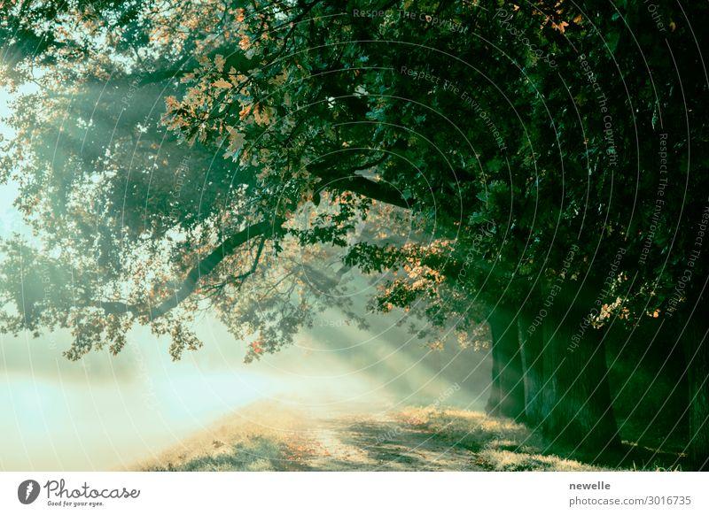Sonnenaufgang mit Strahlen vor dem Hintergrund eines nebligen, geheimnisvollen Pfades. schön Umwelt Natur Landschaft Herbst Nebel Baum Blatt Park Wald Straße