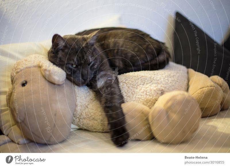 Best friends Häusliches Leben Wohnung Sofa Bett Flirten Tier Haustier Katze Fell Krallen Lamm Erholung krabbeln Liebe schlafen ästhetisch außergewöhnlich