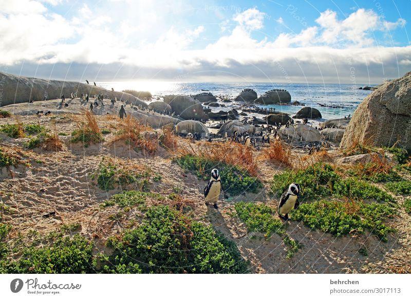*1300* pinguine:) Himmel Ferien & Urlaub & Reisen Natur Landschaft Meer Wolken Ferne Strand Küste Tourismus außergewöhnlich Freiheit Vogel Felsen Ausflug Wellen