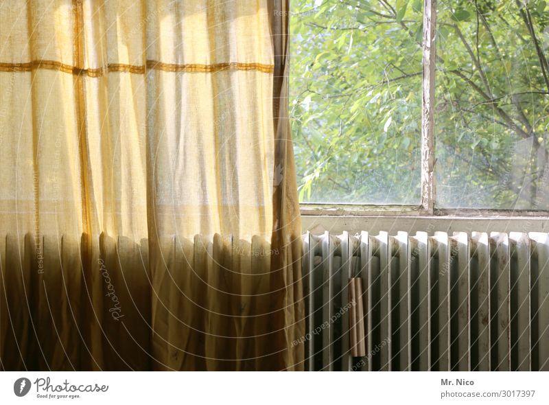 Das Fenster zum Hof Häusliches Leben Wohnung Renovieren alt hässlich Einsamkeit Heizkörper Gardine Vorhang Baum Blatt Mittelstand Aussicht Altbau Fensterscheibe