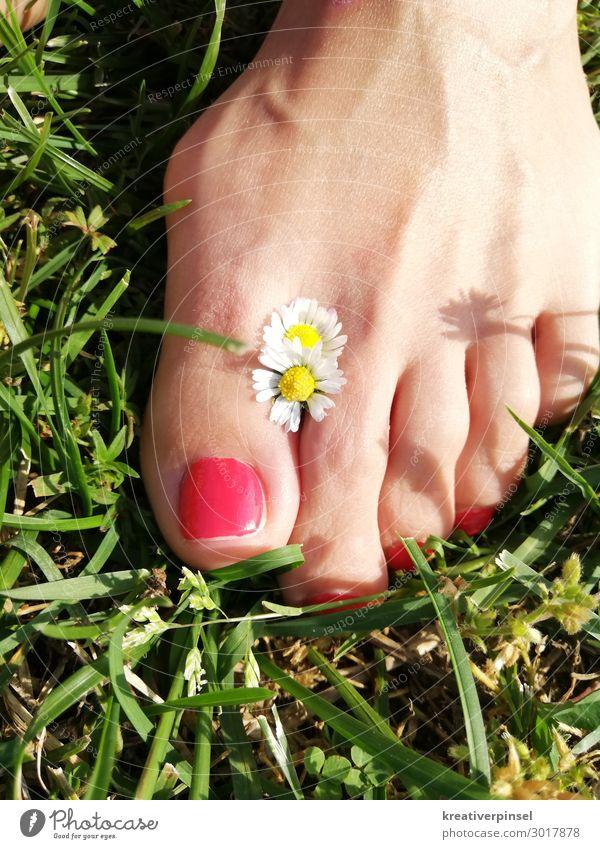 Fuß im Glück Pediküre Sommer Sonne feminin Pflanze Erde Schönes Wetter Blume Gras Wildpflanze natürlich gelb grün rot weiß Außenaufnahme Tag Gänseblümchen
