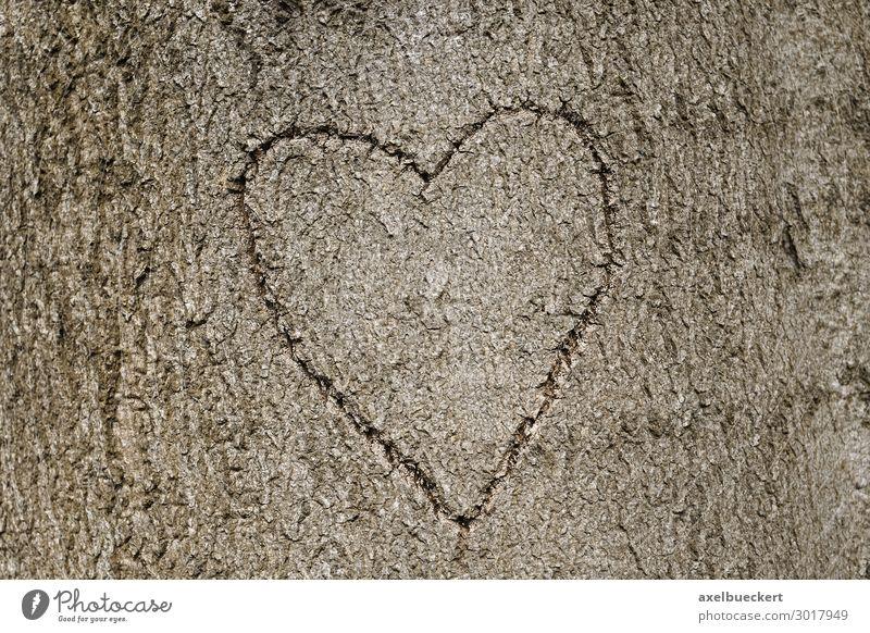 Herz Symbol in Baum geritzt Lifestyle Valentinstag Natur Wald Zeichen Liebe Symbole & Metaphern Hintergrundbild herzförmig Liebesbekundung Baumstamm Baumrinde