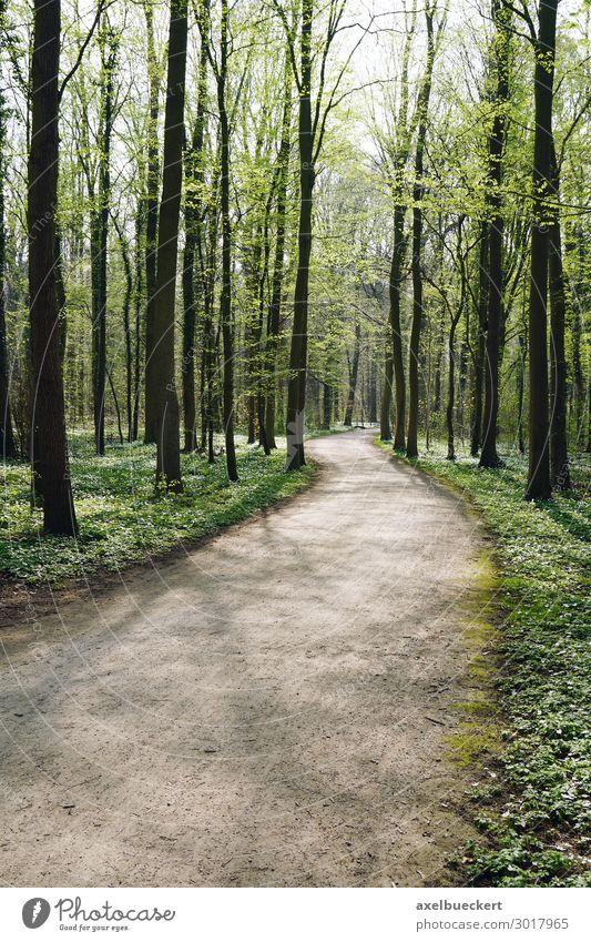 Waldweg im Frühling Ferien & Urlaub & Reisen Natur grün Landschaft Baum Hintergrundbild Wege & Pfade Deutschland Freizeit & Hobby wandern Europa leer Fußweg
