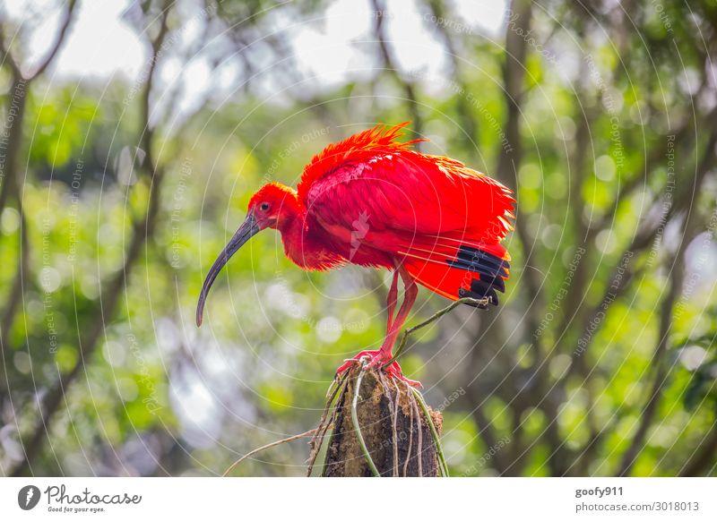 Scharlachsichler Ferien & Urlaub & Reisen Ausflug Abenteuer Ferne Freiheit Safari Expedition Natur Landschaft Sonne Sonnenlicht Baum Sträucher exotisch Wald