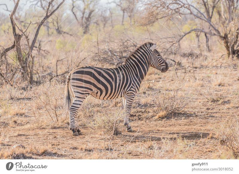 Was ist da hinten?? Ferien & Urlaub & Reisen Tourismus Ausflug Abenteuer Ferne Freiheit Safari Expedition Umwelt Natur Landschaft Erde Wärme Dürre Gras