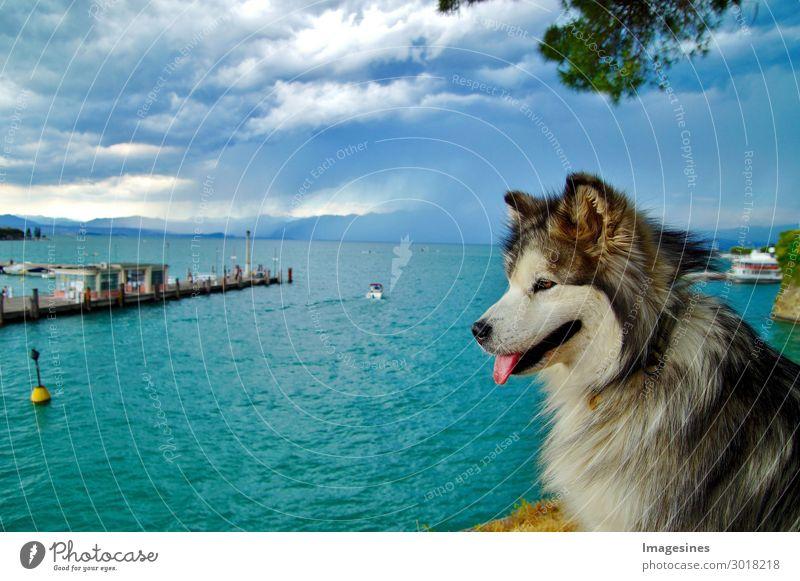 Hund sitzt am Rande einer Klippe am See vor einem Gewitter. Ferien & Urlaub & Reisen Tourismus Ausflug Freiheit Sommer Sommerurlaub Sonne Strand Meer Natur