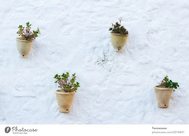 Traditionelle Keramik-Topfpflanzen Pflanze Blumentopf Keramikherstellung braun Terrakotta Erde Ton Dekoration & Verzierung retro weiß Wand Hintergrundbild
