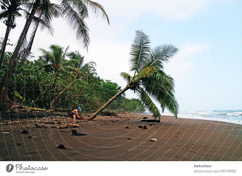 unter palmen Kontrast Licht Tag traumhaft Fernweh unberührt wild Farbfoto Außenaufnahme schön Karibik tortuguero Costa Rica fantastisch Kokosnuss Wellen Küste