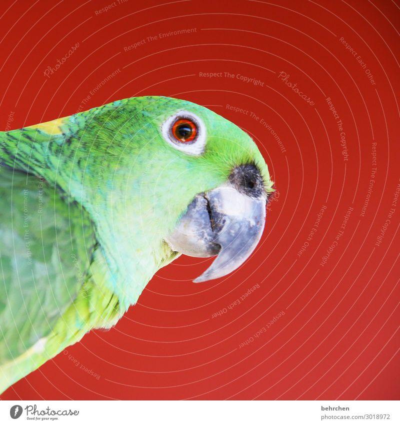 moinsen| farbenfrohes bild mit papagei Tierporträt Kontrast Licht Tag Menschenleer Detailaufnahme Nahaufnahme Außenaufnahme Farbfoto Fernweh Tierliebe