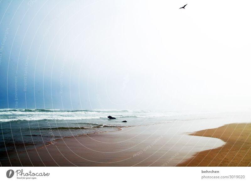 luftig | hoch oben Ferien & Urlaub & Reisen Tourismus Ausflug Abenteuer Ferne Freiheit Natur Landschaft Himmel Nebel Wellen Küste Strand Meer Vogel Möwe