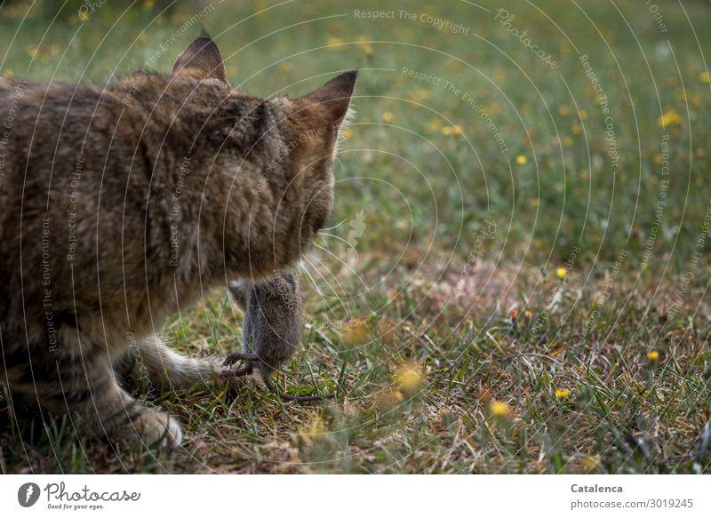 Jagderfolg Katze Natur Sommer Pflanze grün Blume Tier gelb Blüte natürlich Wiese Gras Garten braun Stimmung Angst