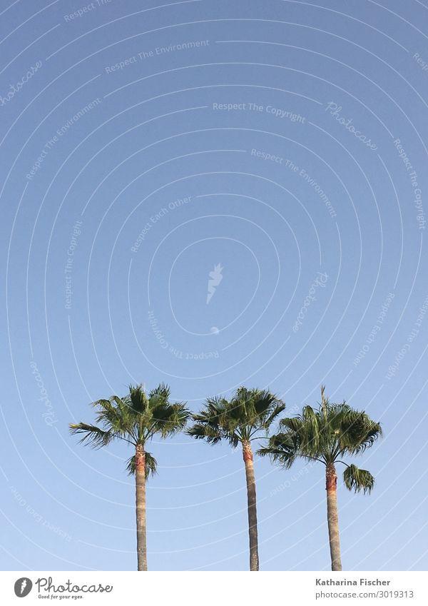 Palmen Natur Himmel Frühling Sommer Herbst Winter Schönes Wetter blau braun grün Ferien & Urlaub & Reisen Palmenwedel Strand Meer Süden Spanien Andalusien 3
