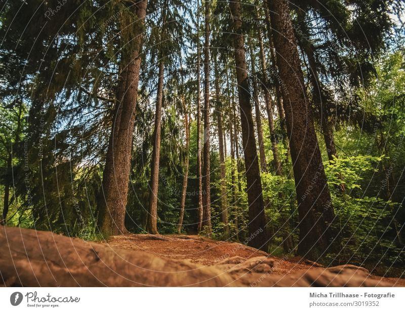 Sonnenlicht auf dem Waldweg Ferien & Urlaub & Reisen Tourismus Ausflug wandern Umwelt Natur Landschaft Pflanze Sand Himmel Schönes Wetter Baum Erholung