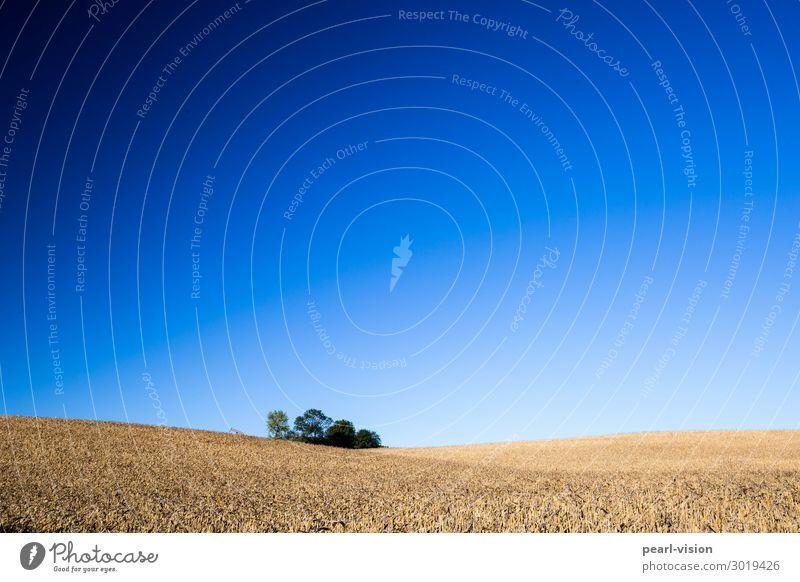 wäldchen Himmel Natur Sommer Landschaft Horizont Feld Schönes Wetter Hügel Wolkenloser Himmel
