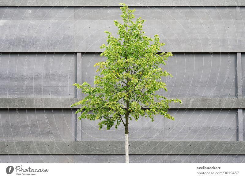 Baum vor Beton Fassade Umwelt Natur Frühling Pflanze Stadt Menschenleer Bauwerk Gebäude Architektur Mauer Wand grau grün Hannover Sprengelmuseum minimalistisch