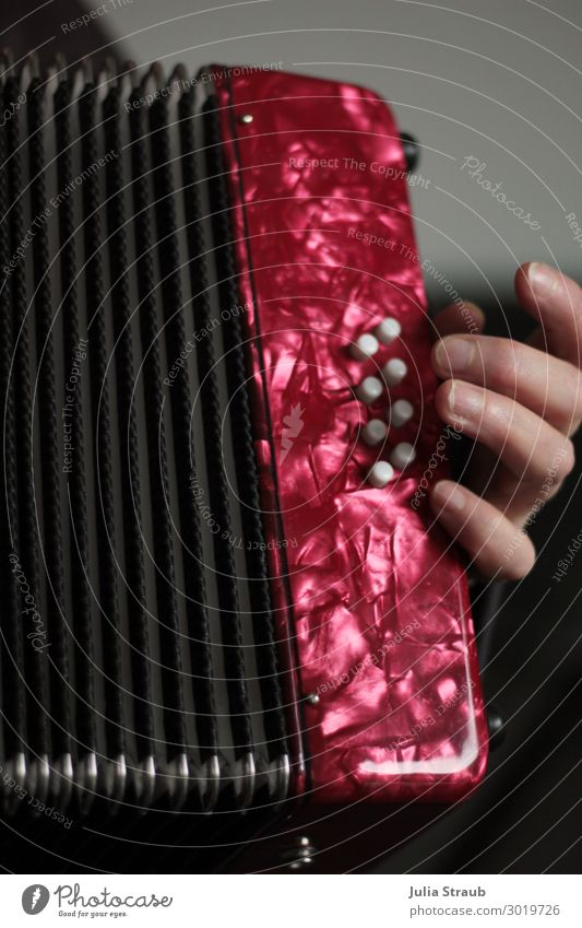 akkordeon hand lernen Hand Spielen Musik Musikinstrument Akkordeon Akkordeonspieler schifferkalvier Knöpfe ziehen Musikunterricht rot Perlmutt Farbfoto