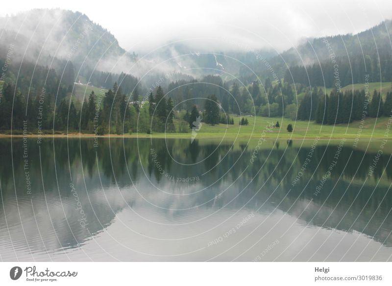 Landschaftsaufnahme am Spitzingsee, Spiegelung mit Bergen und Nebel Umwelt Natur Pflanze Wasser Frühling Baum Gras Alpen Seeufer Erholung ästhetisch