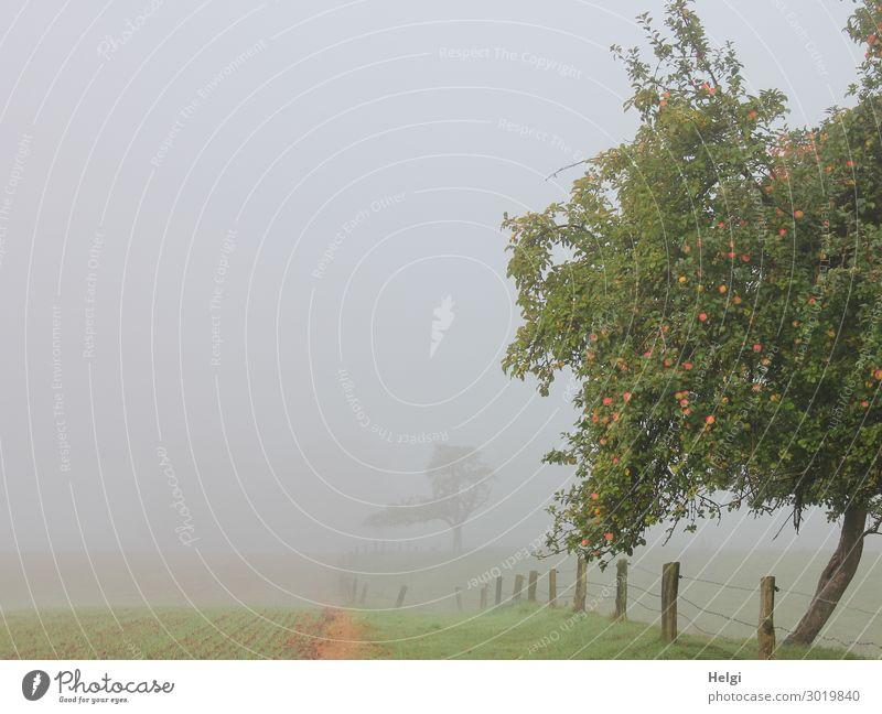 nebulös   keine Fernsicht Natur Pflanze grün Landschaft Baum Einsamkeit Lebensmittel Herbst Umwelt kalt natürlich Gras außergewöhnlich braun grau Frucht