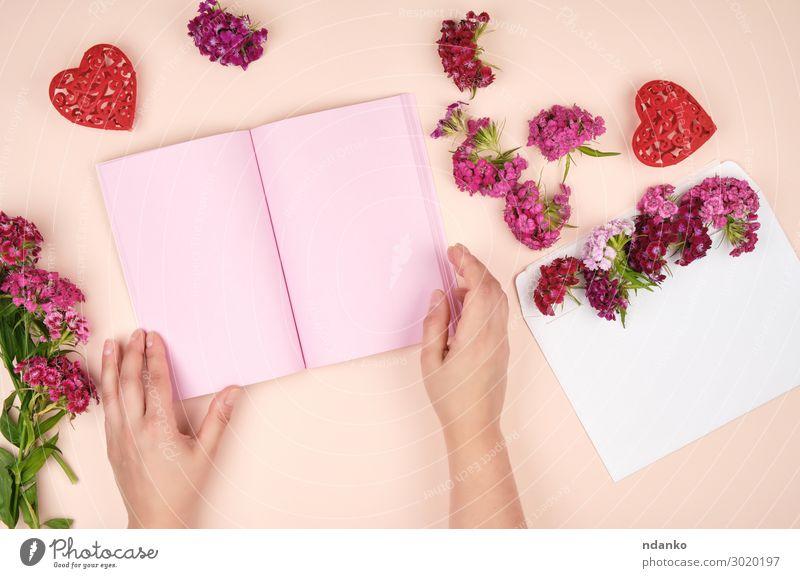 Frauenhände und ein offenes Notizbuch mit rosa Blankoblättern elegant Körper Haut Valentinstag Muttertag Geburtstag Mensch Erwachsene Arme Hand Finger Natur
