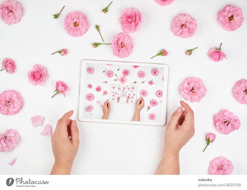 weißes elektronisches Tablett Dekoration & Verzierung Büro Business PDA Computer Bildschirm Technik & Technologie Internet Frau Erwachsene Hand Finger Blume