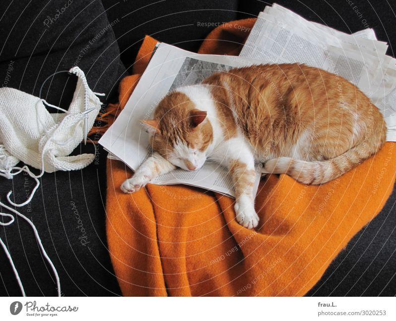 Eingenickt Häusliches Leben Wohnung Sofa Zeitung Zeitschrift Tier Haustier Katze 1 schlafen träumen schön kuschlig niedlich orange schwarz weiß Zufriedenheit