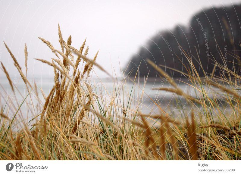 Meergras Winter ruhig Gras Wind Halm Rügen Binz