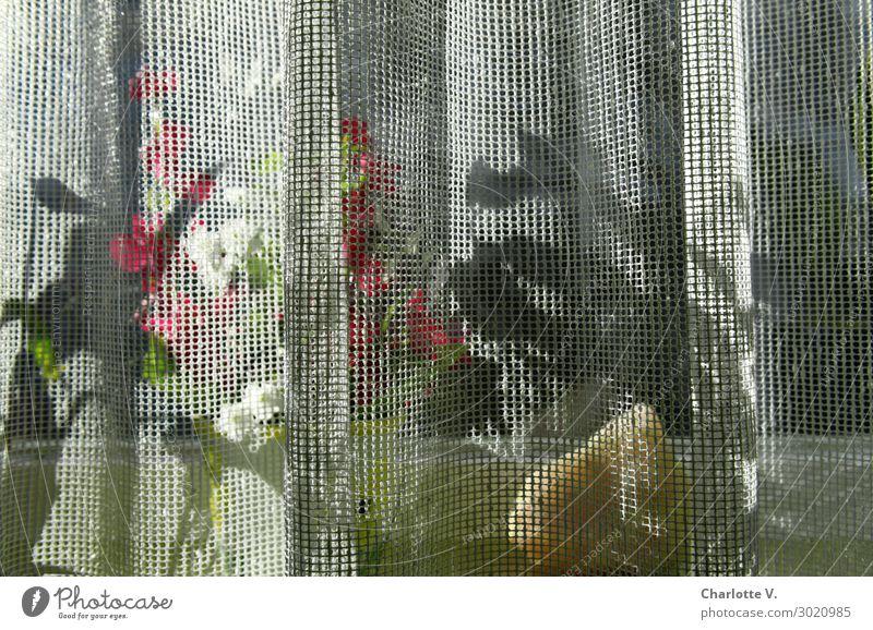 Luftig | versteckt Häusliches Leben Wohnung Dekoration & Verzierung Fensterbrett Vorhang Blumentopf Pflanze Grünpflanze Topfpflanze Gardine Stein authentisch