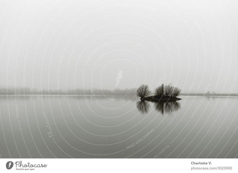 Luftig | Viel Platz Himmel Natur Wasser Landschaft Baum Einsamkeit ruhig Winter dunkel Traurigkeit See Denken grau Horizont Nebel elegant